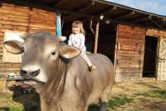 alois býk 14