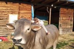 alois býk 16