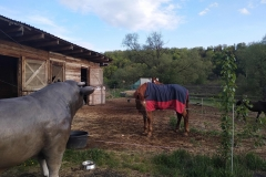 alois býk 19