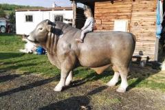 alois býk 15