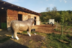 alois býk 18