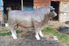 alois býk 12